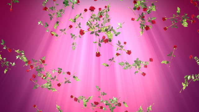 Romance background loop. Falling red roses. Pink /purple backdrop. video