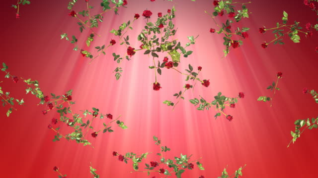 Romance background loop. Falling red roses. video