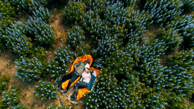 romantic date on a meadow. aerial view - leżeć filmów i materiałów b-roll