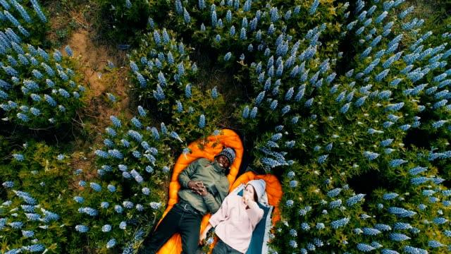 romantisches date auf einer wiese. luftbild - lupine stock-videos und b-roll-filmmaterial