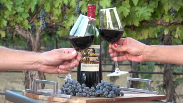 Romantic Picnic Wine Tasting. Couple manking a toast in a Vineyard Setting video