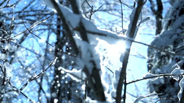 romantic winter season nature landscape of snow mountain trees panorama video