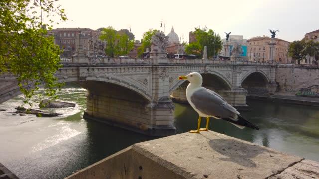 roma nehri tiber seagull at susnet - vatikan şehir devleti stok videoları ve detay görüntü çekimi