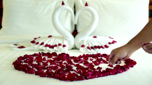 Room maid scatter many rose petals on bed video