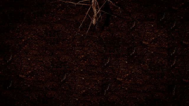 Root growing underground HD video