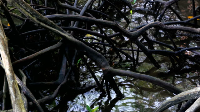 Roots of mangroves submerged in water video
