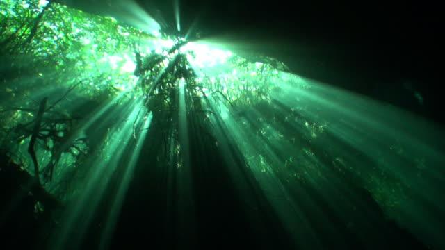 Wortels van bomen onderwater in Yucatan cenotes grotten. video