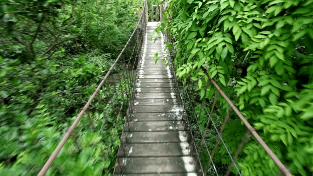 Rope walkway through Rope walkway through in rain forest suspension bridge stock videos & royalty-free footage