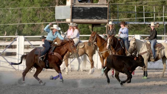 roping cowgirl - rodeo stock videos and b-roll footage
