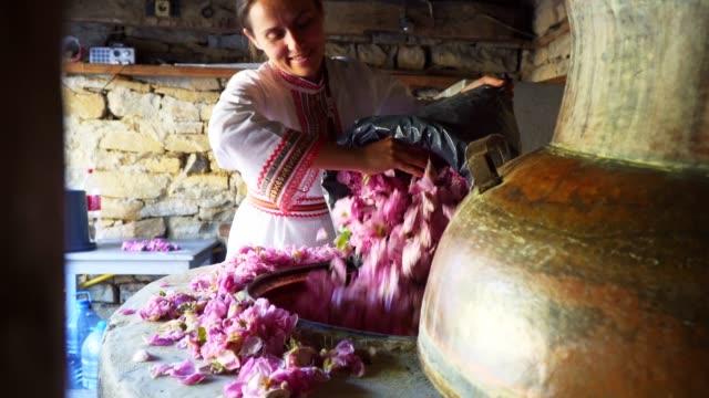 mer från rosa damascena. eterisk olja produktions säsongen är nu. överflödet av den berömda bulgariska rosen är i sin topp. - bulgarien bildbanksvideor och videomaterial från bakom kulisserna