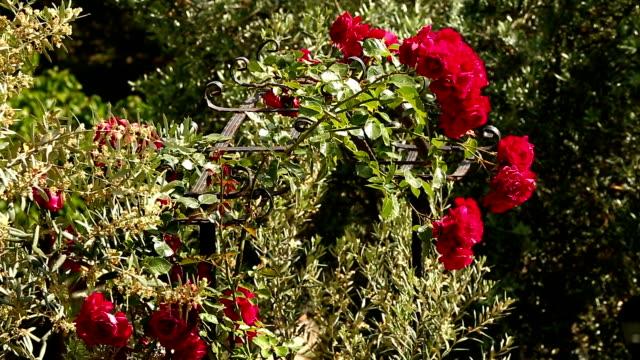 rose door video