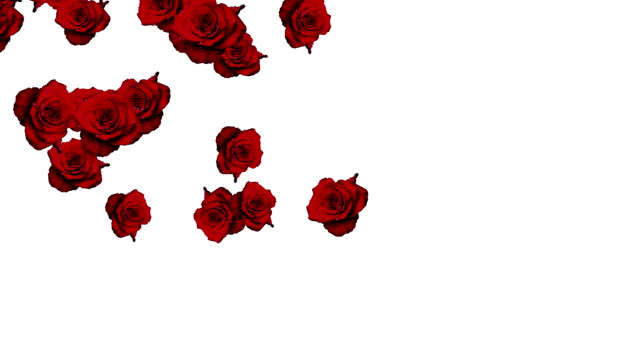 Rose Falling video