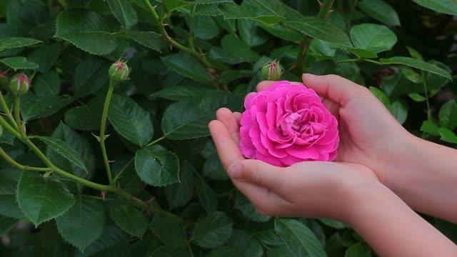 rose flower children girl hand hd footage