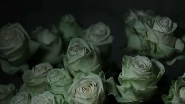 vídeos y material grabado en eventos de stock de flor de rosa pared afilada fondo hd - aniversario