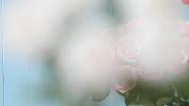 rosen blomma - white roses bildbanksvideor och videomaterial från bakom kulisserna