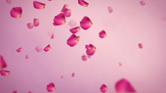 vídeos y material grabado en eventos de stock de pétalos de rosa caída de alta definición - pétalo