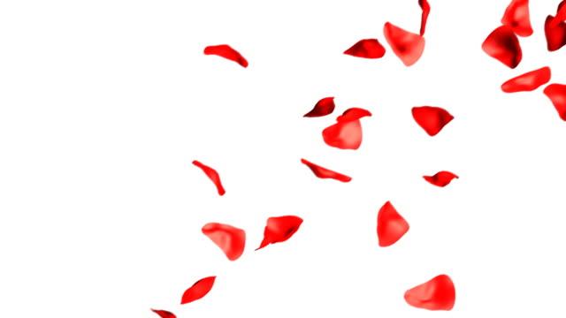 Rose Petals Falling Hd