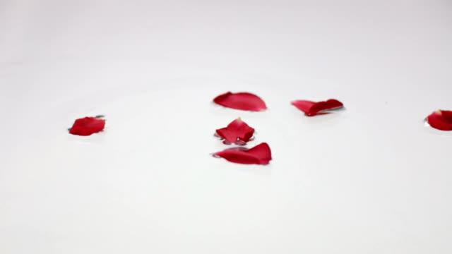 Rose petals Falling in water video