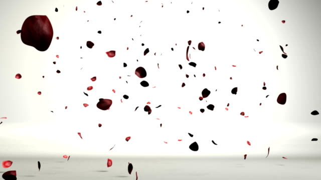 Rose petals in a white room falling video