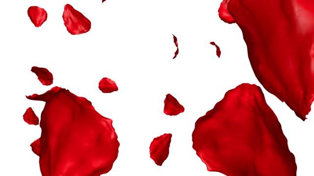 Rose petals video