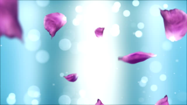 rose petals - treedeo stock videos and b-roll footage