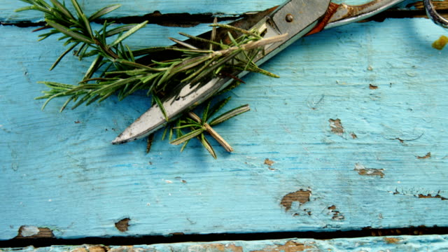 Rosemary and scissors on wooden table 4k video