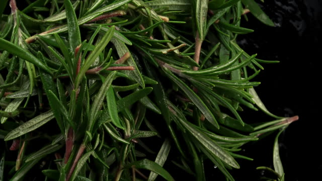 rosemary leaves in the air