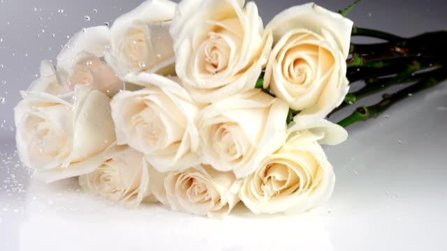 rosor faller slow motion - white roses bildbanksvideor och videomaterial från bakom kulisserna