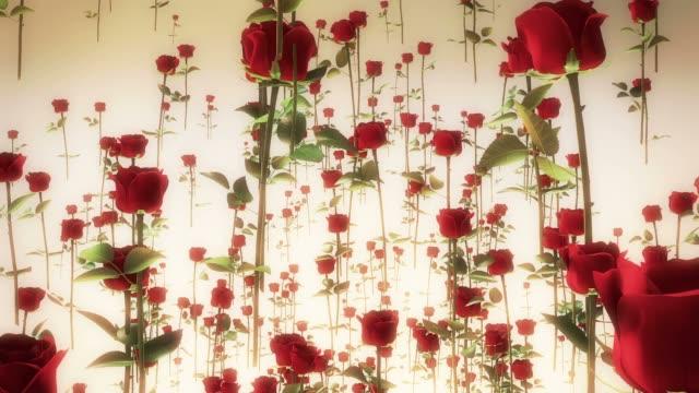 roses flying - white roses bildbanksvideor och videomaterial från bakom kulisserna