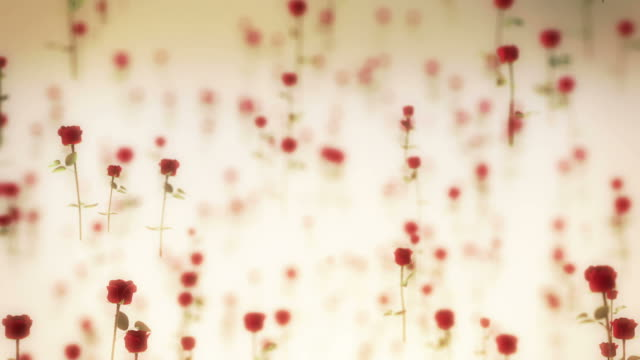 Roses Flying video
