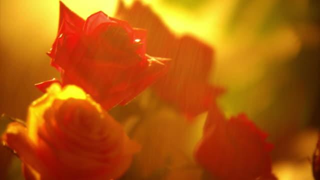 vidéos et rushes de hd1080 roses, ntsc, pal - bouquet formel