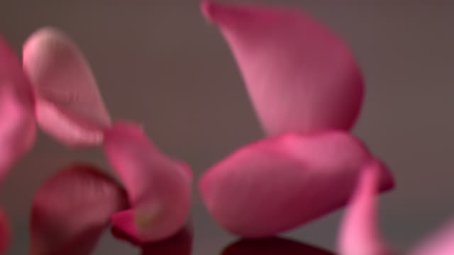 Roses video