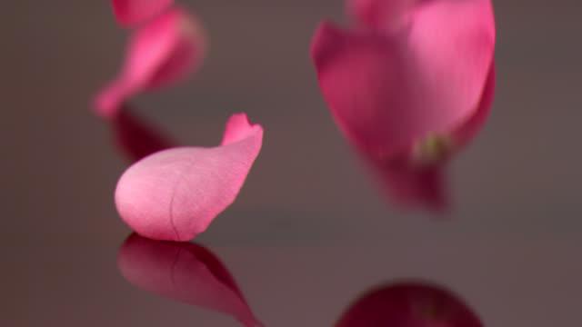 vídeos y material grabado en eventos de stock de rosas. - pétalo