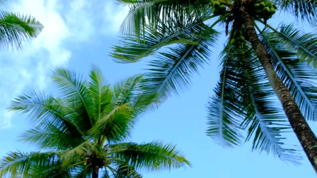 Rotate and Looking up shot on Coconuts tree, Palm tree,  POV view. Beautiful Sun's light through tops of trees.