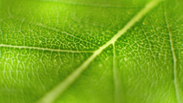 Rotate Macro shot close focus on a green leaf