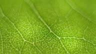 istock Rotate Macro shot close focus on a green leaf 1169178486