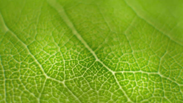 Rotate Macro shot close focus on a green leaf