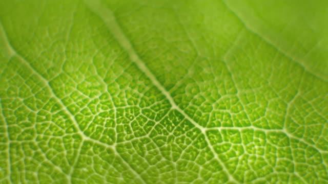 녹색 잎에 매크로 샷 클로즈 포커스 회전 - leaf 스톡 비디오 및 b-롤 화면