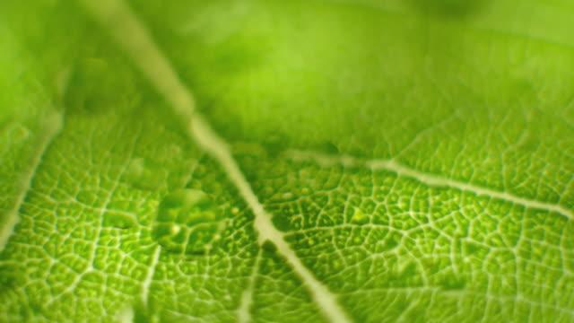緑色の葉に近いフォーカスを回転マクロショット ビデオ