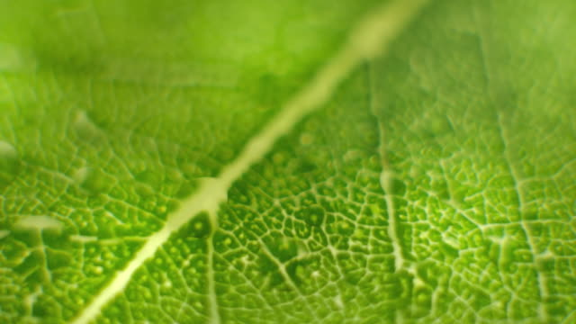 Rotate Macro shot close focus on a green leaf Rotate Macro shot close focus on a green leaf for environment nature sustainable development conservation theme plant cell stock videos & royalty-free footage