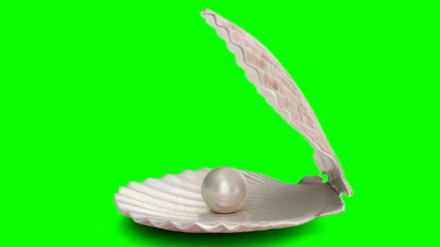 vidéos et rushes de perle tournante à l'intérieur de la coquille de mer d'isolement sur un fond vert. perles de perles de bijoux. boule brillante de perle d'huître pour des accessoires de luxe. perle de mer brillante. animation 3d 4k en boucle - coquillage