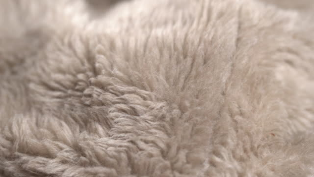 rotate:gray animal fur background - tappeto video stock e b–roll