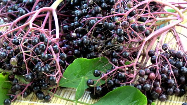 rotating black elder sambucus nigra medical berries - bacca video stock e b–roll