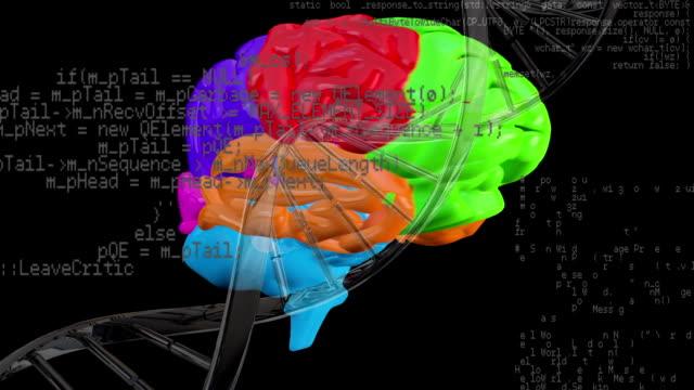 cervello rotante e elica del dna - rappresentazione umana video stock e b–roll