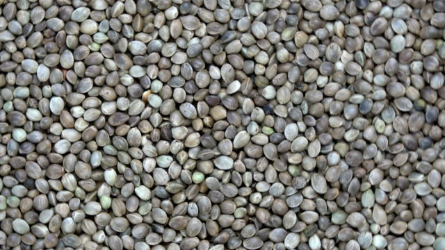 rotating cannabis seeds grain background - семя стоковые видео и кадры b-roll