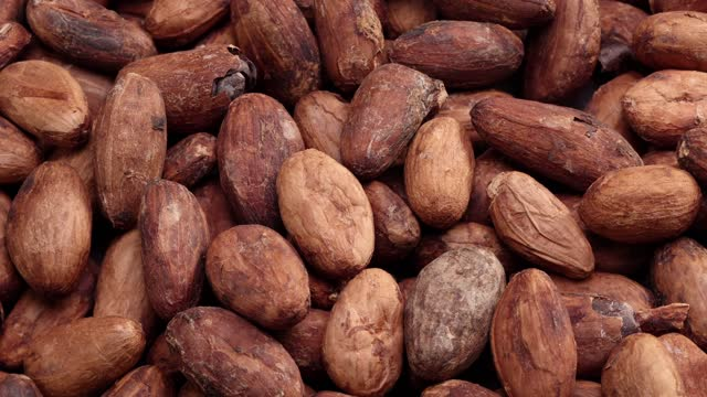 rotating cocoa beans background close up