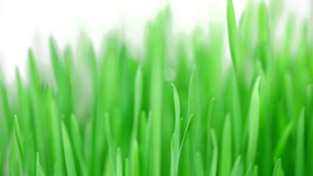 Rotating fresh new green grass bunch background video