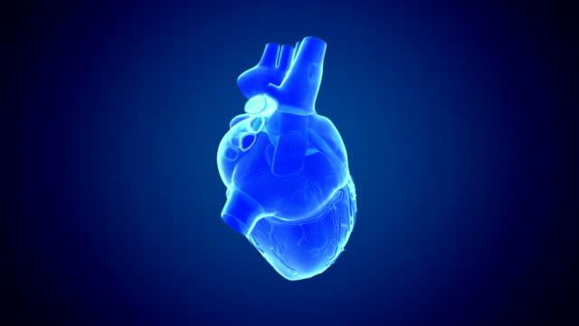 vídeos de stock e filmes b-roll de rotating heart blue - coração humano