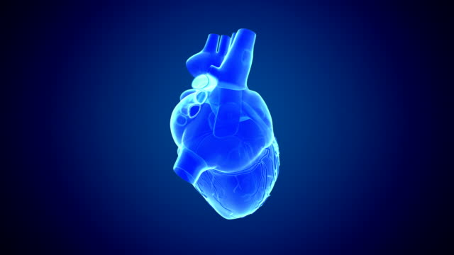 vidéos et rushes de rotation de coeur bleu - coeur humain