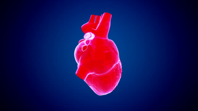 Rotating Heart Red Rotating Heart Abstract Background heart internal organ stock videos & royalty-free footage